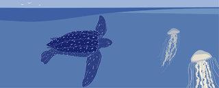 La tortue Luth pour Nidoo