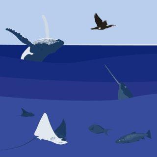 World Ocean Day 1/3