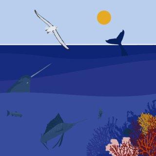 World Ocean Day 2/3