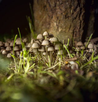 mushrooms from Fontaine