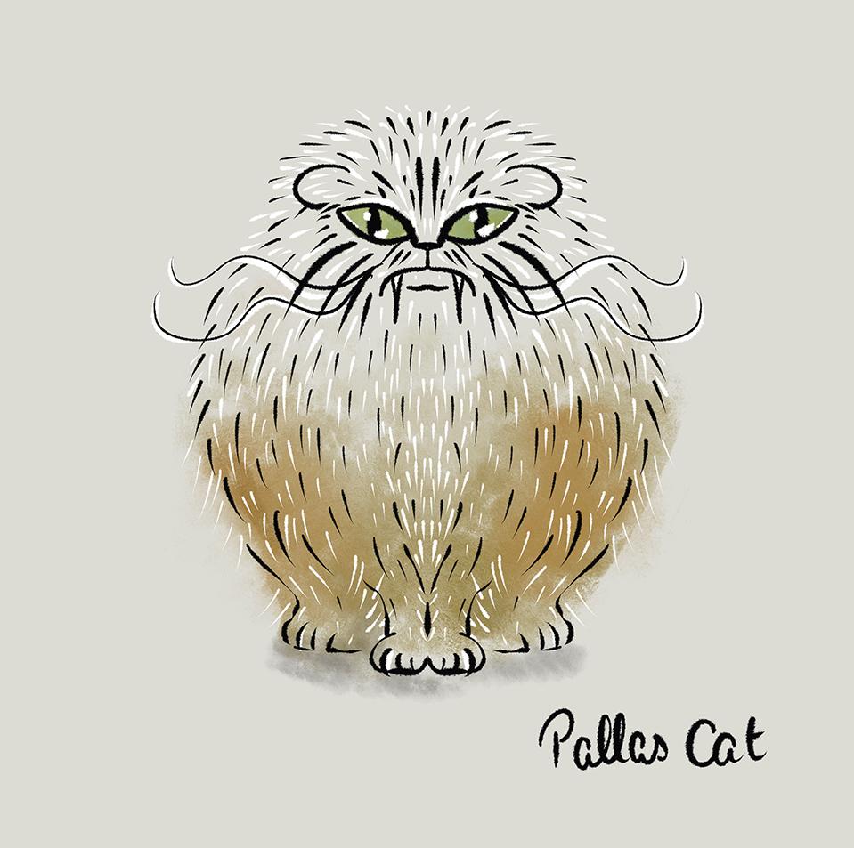 Pallas Cat.jpg