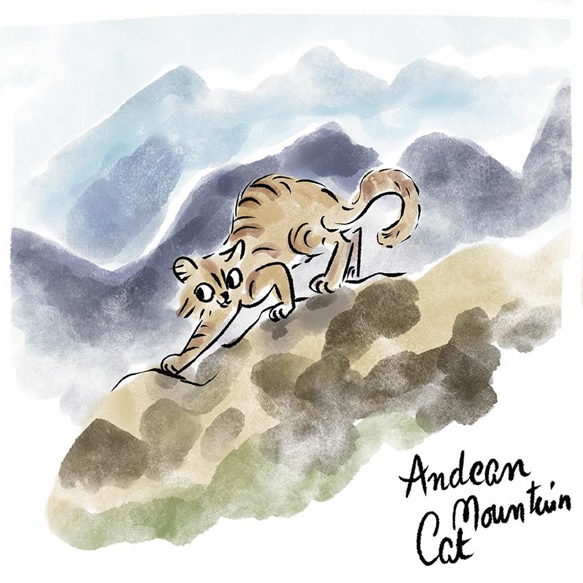 Andean Cat.jpg