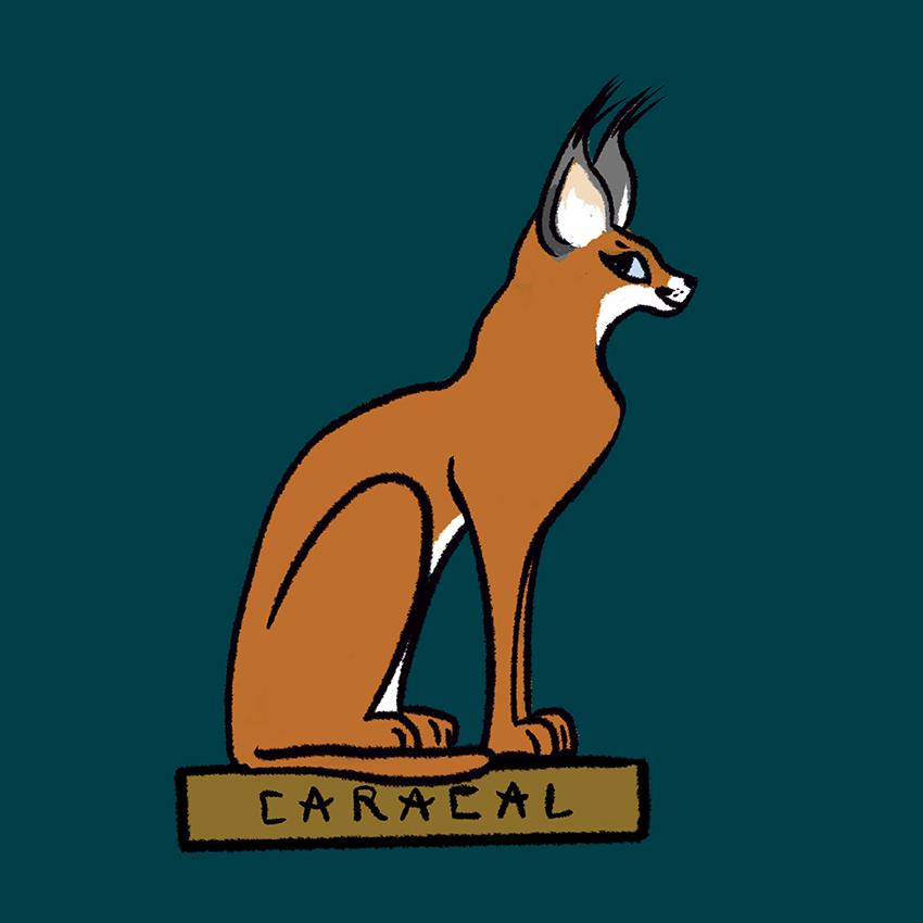 Caracal.jpg