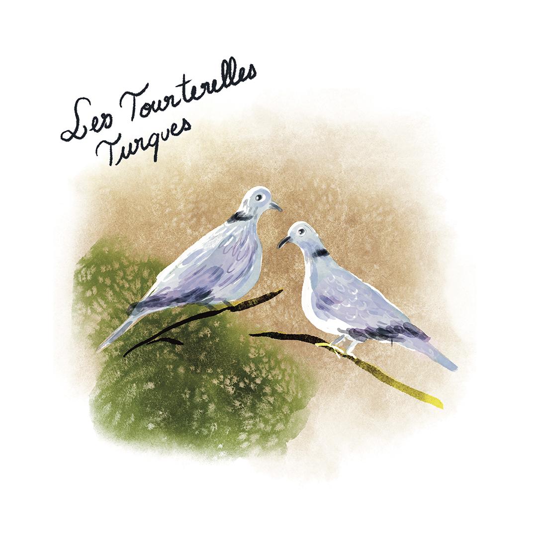 Tourterelles.jpg