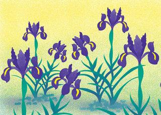 Iris dressés